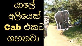 යාලේ අලියෙක් Cab එකට ගහනවා -Yaala Elephanant attack on jeep safari-