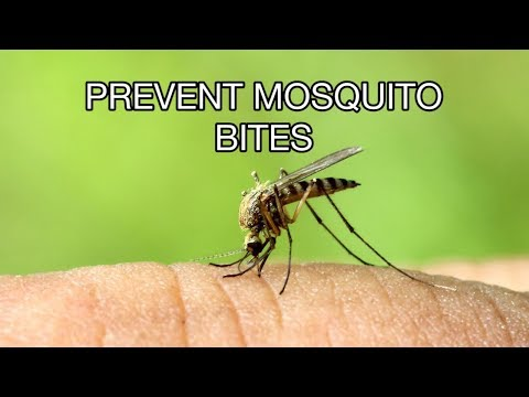 How To Prevent Mosquito Bites While Sleeping, Camping at Home