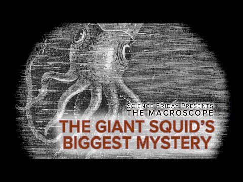 The Giant Squid's Biggest Mystery