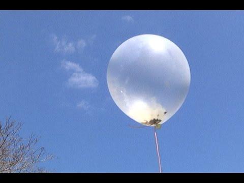 """Milkweed Dispersal Balloons"""