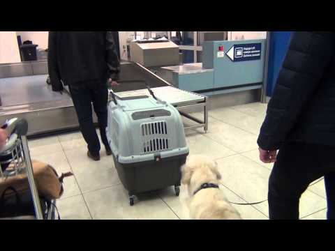 DOG TRAVELS BY AIRPLANE