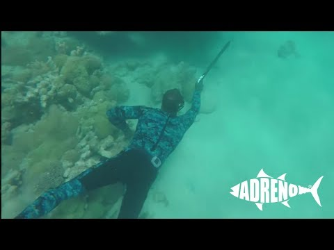 Spearfishing Torres Strait with Sailing Catalpa | Adreno Spearfishing