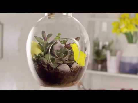 How to create an Easter terrarium