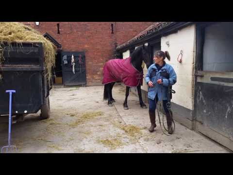 Watch a horse put its own bridle on...clicker training outcome :)