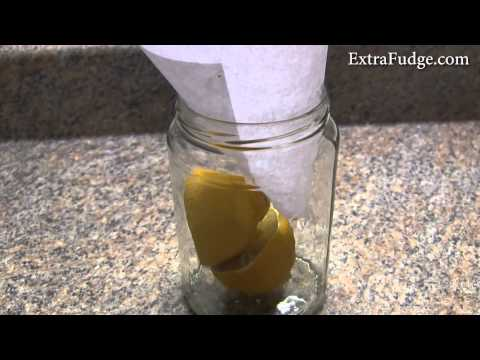 How To Get Rid of Fruit Flies Without Using Pesticides