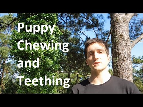 Puppy Chewing and Teething  - Dog Training Nibbles Ep5