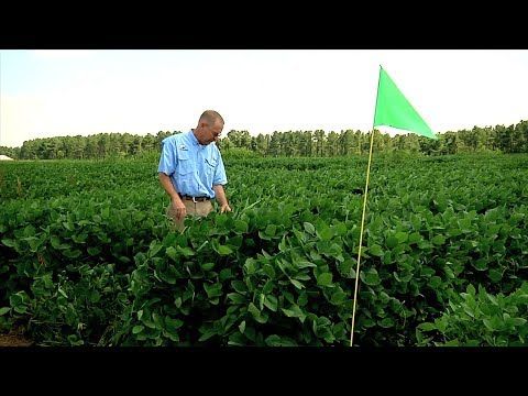 Dicamba Research