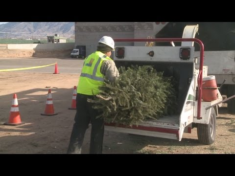City of Albuquerque expects to recycle 15,000 Christmas trees