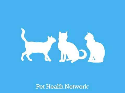 1 in 3 Cats Will Get Kidney Disease