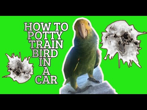 BIRD MAKES POOP IN A DRIVING  CAR