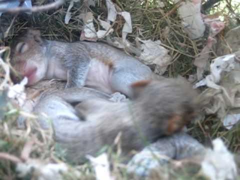 Squirrel nest in my window