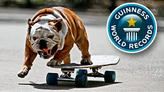 10 Animals That Are More Talented Than You