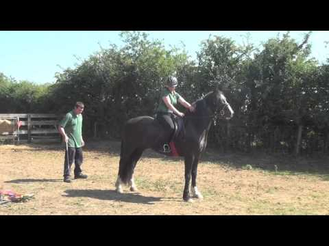 Confidence exercises for horse riding and carriage driving - spooking and nervous horse training.