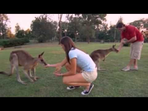 Tourism Australia's best job in the world competition 2013 - video - World news - guardian.co.uk