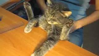 Пластилиновый кот Барсик