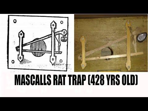 Mascalls rat trap