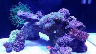 Aqua Reef 395 Update # 2 New Fish/Deaths