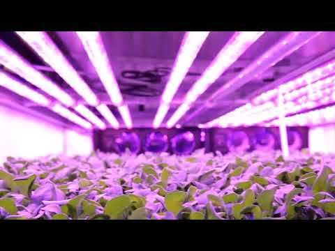 The world's biggest vertical farm