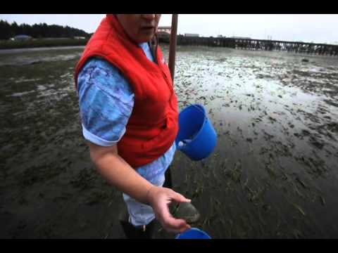 How to go clamming in Oregon
