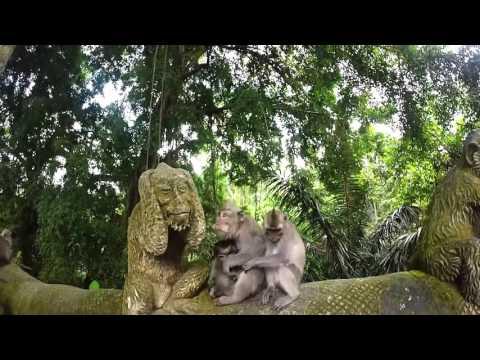 Indonesia Backpacking GoPro Nikon ( Bali Gilli Island Travel Lombok Rinjani Java Kawah Ijen)