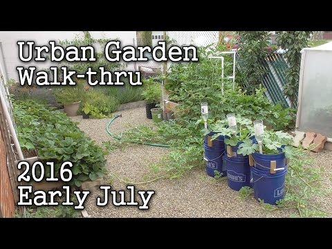 2016 July 4th Albopepper Urban Garden Update