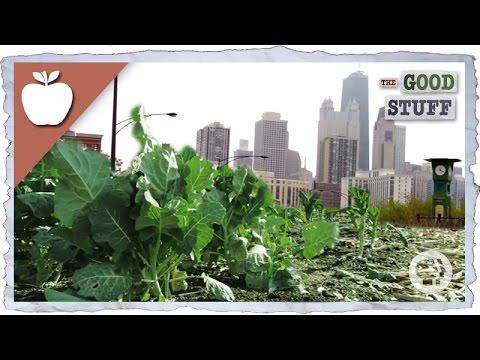Why We Should Be Urban Farming