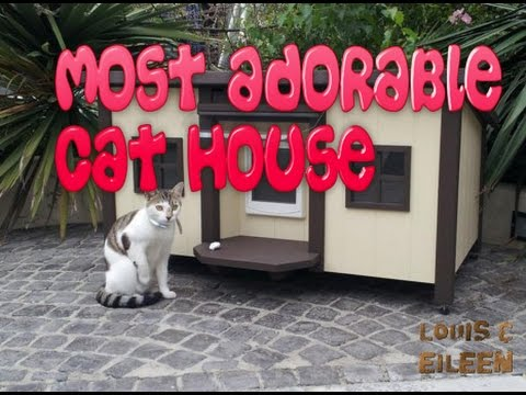 Most Adorable Outdoor Cat House Around the Globe | Cat House Ideas | DIY Cat House