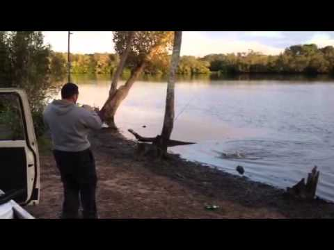 Logan river bullshark catch 2013