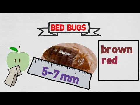 Bed Bug Control in Miami - Toro Pest - Call: 305-594-4767