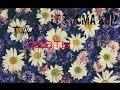 Download  Lp$^^ ♡ TaG^ - ^ Цветы ♡ ( Люблю цветочки ) MP3,3GP,MP4