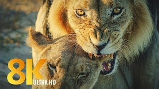 8K Wildlife of Kgalagadi Transfrontier Park, South Africa - Part #2