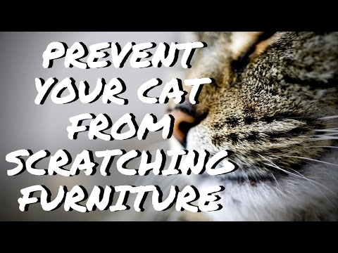 How to prevent your cat from clawing furniture, carpets, and sofas 🐱 No declawing needed