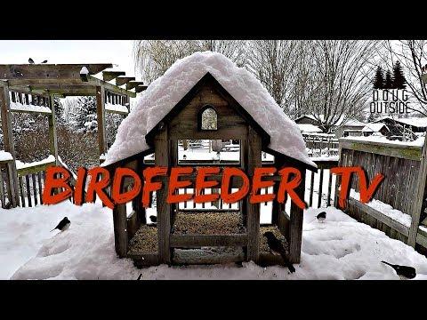 Birdfeeder TV