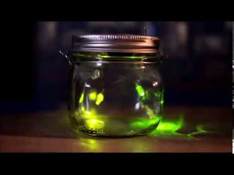 LED Firefly Jar