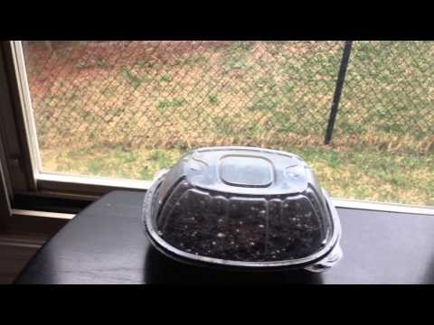 How To Make a DIY Seedling Starter Greenhouse Kit with Rotisserie Chicken Container!