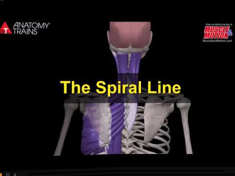 Muscular Anatomy, Anatomy Trains