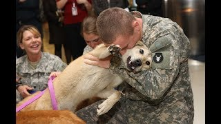 5 Pets That RETURNED Home After Being Lost