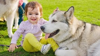 Best Babies Laughing Hysterically at Dogs Compilation (2016)