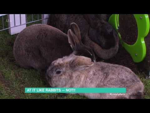 Could Your Rabbit Be Depressed? | This Morning