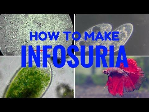How to make infosuria step by step 100% success