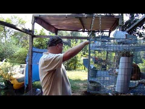 Rabbit Husbandry - Affordable Latch Alternatives for All Wire Rabbit Cages