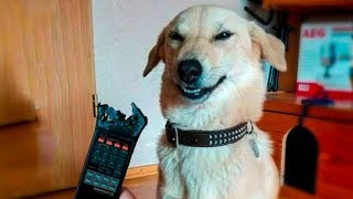 🤣 Funniest 🐶 Dogs And 😻Cats - Try Not To Laugh - Funny Pet Animals