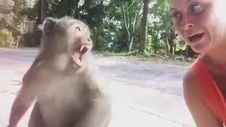 If you LAUGH this Monkey will Visit You 🐵😂😱 YLYL ★67