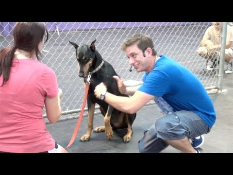 Don't make this dog training mistake