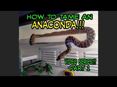 How To Tame An Anaconda!!!! Video Series (Episode 1)
