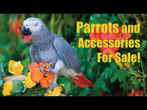 Arizona Bird Store | Parrots - Exotic Birds - Cages For Sale in Mesa AZ