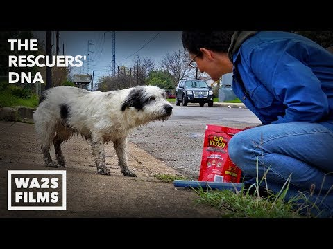 Fastest Rescue & Reunion of Lost Hungry Dog Ever Because of Microchip - Hope For Dogs | My DoDo