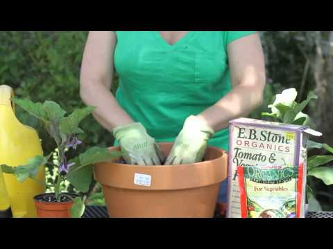 How to Mulch Eggplant