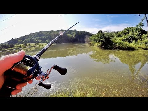 Trying to Catch Finicky Pond Bass