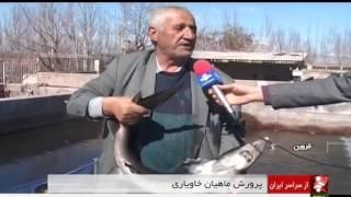 Iran Sturgeon fish farming, Qazvin province پرورش ماهيان خاوياري استان قزوين ايران